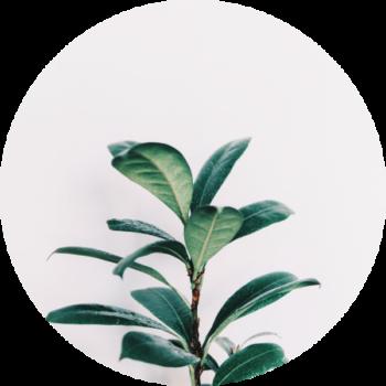 liście dietetyczne